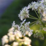 Flowers in Nether Kellet